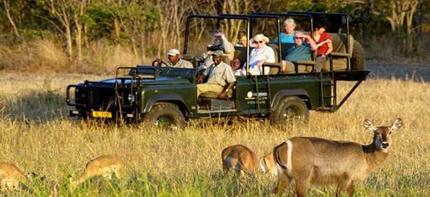 jungle-safari-malawi